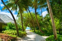 Övre bild för slut av den härliga tropiska trädgården Arkivbild