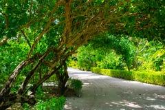 Övre bild för slut av den härliga tropiska trädgården Arkivfoto