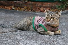 Övre bild för slut av en gullig katt arkivfoto