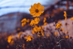 Övre bild för slut av lösa blommor royaltyfri fotografi