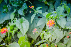 Övre blick för slut av de lösa blommorna Arkivfoton