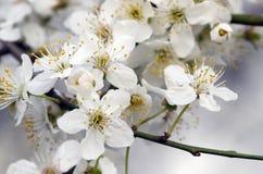 Övre blomma för slut Arkivfoton