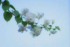 Övre blomma för slut i trädgården arkivfoto