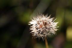 Övre detalj för slut av frö av en blomma och en natur Arkivbilder