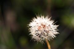 Övre detalj för slut av frö av en blomma och en natur Arkivfoto