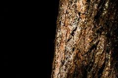 Övre detaljabstrakt begrepp för slut av trädskället på svart bakgrund royaltyfri foto