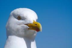 Övre för Seagull nära och blå himmel. Arkivfoton