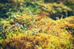 övre för tät moss för bakgrund trevligt Royaltyfri Fotografi