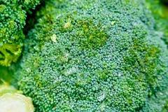 Övre grön blomkål för slut royaltyfri fotografi