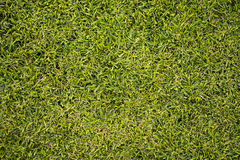 Övre grön gräsmatta för slut royaltyfri foto
