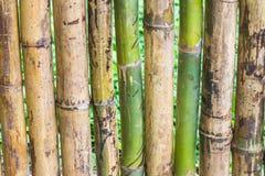 Övre grönt bambustaket för slut Royaltyfri Bild