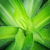 Övre grönt blad för slut Royaltyfria Bilder