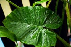 Övre grönt blad för slut med vattendroppar Royaltyfri Fotografi