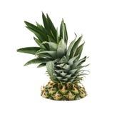 Övre - halva av en ananasfrukt Royaltyfria Bilder