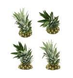Övre - halva av en ananasfrukt Royaltyfri Fotografi