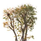 Övre - isolerat halvt träd Royaltyfri Foto