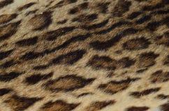 Övre modell för slut av leopardhud Arkivfoton