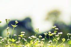 Övre och trädbakgrund härligt blommande slut för vit blomma Arkivfoto