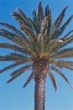 Övre sikt av en palmträd i sunen royaltyfria foton