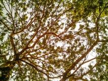 Övre sikt av treen Arkivfoton