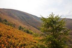 övre sikt för carpathian berg Fotografering för Bildbyråer