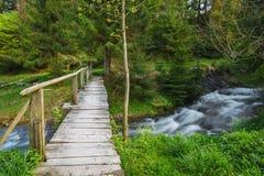 övre sikt för carpathian berg Bergfloden nära vattenfallet Shipot Arkivfoton