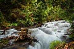 övre sikt för carpathian berg Bergfloden nära vattenfallet Shipot Fotografering för Bildbyråer