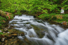 övre sikt för carpathian berg Bergfloden nära vattenfallet Shipot Royaltyfri Bild