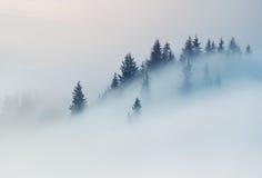 övre sikt för carpathian berg Blasten av träd som klibbar ut ur dimman Arkivbild