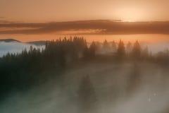 övre sikt för carpathian berg Dimmig soluppgång över kanten av skogen Arkivfoton