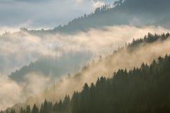 övre sikt för carpathian berg Fördunkla på berglutningarna som täckas av skogen Royaltyfria Bilder