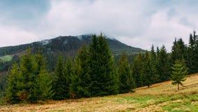övre sikt för carpathian berg Landskap med granar på en molnig dag Ukrai Arkivfoto