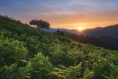 övre sikt för carpathian berg Solen ställer in bak bergen, en ormbunke på solnedgången Arkivbild