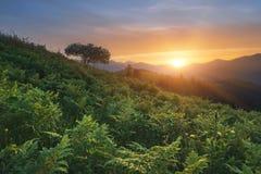 övre sikt för carpathian berg Solen ställer in bak bergen, en ormbunke på solnedgången Royaltyfri Foto