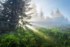 övre sikt för carpathian berg Strålarna av resningsolen som strömmar till och med träden Royaltyfri Bild