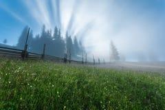 övre sikt för carpathian berg Strålarna av resningsolen som strömmar till och med träden Royaltyfri Fotografi