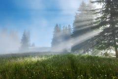 övre sikt för carpathian berg Strålarna av resningsolen som strömmar till och med träden Arkivbild