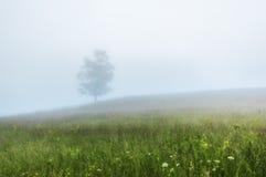 övre sikt för carpathian berg Tree i misten Arkivbild