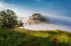 övre sikt för carpathian berg Vägen som leder till kanten av skogen Arkivbilder