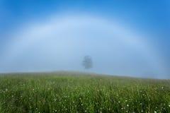 övre sikt för carpathian berg Vit regnbåge i misten med ett träd Royaltyfria Foton