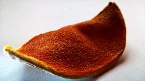Övre sikt för slut av det orange skället royaltyfri bild