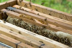 Övre sikt för slut av en bikupa Funktionsdugliga bin på honungskakor fyllde wi arkivfoton