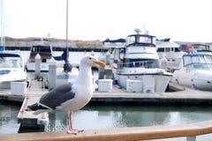 Övre sikt för slut av seagullen Royaltyfria Bilder