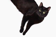 övre sikt för svart katt Arkivfoton