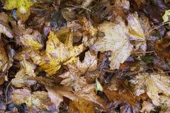 Övre sikt för vått för höstsidor för apelsin för brunt säsongsbetonat slut för färg från över arkivfoton