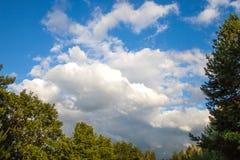 Övre siktsblast för vår av träd i blå himmel för skoganf med vit Fotografering för Bildbyråer