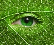 Övre slut för grönt öga och bladtextur Arkivbilder