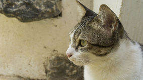 Övre slut och fokus på kattframsida Arkivfoto