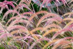 Övre sparat blommagräs för slut arkivbild