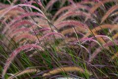 Övre sparat blommagräs för slut arkivbilder